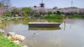 Timelapse of Wuhan East Lake Cherry blossom garden. Wuhan East-lake Cherry blossom garden holds sakura festival every year, these are some 4K timelapse video stock video footage