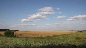 Timelapse z chmurami rusza się nad koloru żółtego polem zbiory wideo
