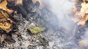 Timelapsevideo van een brandend groot groen blad in de as van een grote stapel van bladeren en takjes in de herfst in 4k 3840 pix stock videobeelden