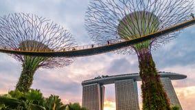 Timelapsezonsondergang bij de Futuric-Tuinen door de baai in Singapore Augustus 2017 stock videobeelden