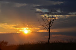 Sunset landscape. And lonely tree, beautiful colors of nature Royalty Free Stock Photos