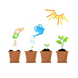 Timeline infographic of planting tree process Royalty Free Stock Photo