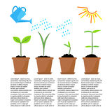 Timeline infographic of planting tree process Stock Photo