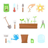 Timeline infographic of planting tree process Stock Photography