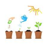 Timeline som är infographic av att plantera trädprocess Royaltyfri Foto