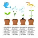 Timeline som är infographic av att plantera trädprocess Arkivfoto