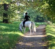 Timeout chewing some grass. Horse and rider taking it easy on a sunny path royalty free stock photography