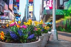 Times Square delle piantatrici della primavera Fotografie Stock Libere da Diritti