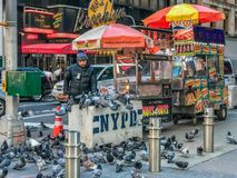Times Square Manhattan NY US - February 5 Street food cart in Manhattan seller is feeding pigeons. Times Square Manhattan NY US - February 5 Street food cart in royalty free stock images