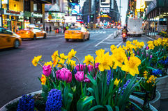 Times Square Spring Planters Royalty Free Stock Image
