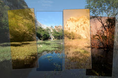 4Times of Water plants and reflections on  surface and beautiful Royalty Free Stock Photo