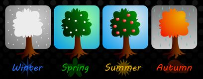 Times of the year. Tree in winter, spring, autumn and summer Royalty Free Stock Photo