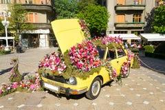 Timfloralis - Blumen-Festival, Timisoara, Rumänien Lizenzfreies Stockbild