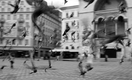 TimiÈ™oara罗马尼亚 库存照片