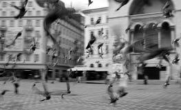 TimiÈ™oara Roumanie photos stock