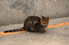 A timid stray cat Royalty Free Stock Photo