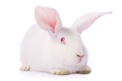 Timid young white rabbit Stock Photos