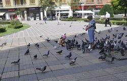 Timisoara, am 22. Juni: Tauben von Victory Square in Timisoara-Stadt von Banats-Grafschaft in Rumänien Stockfoto