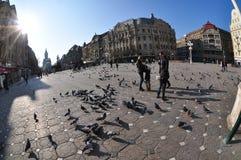 Timisoara Opera Square, Romania Royalty Free Stock Image