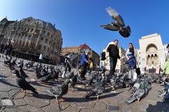 Timisoara Opera Square, Romania Royalty Free Stock Photography
