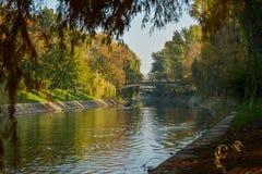 Timisoara parkerar och begumfloden i hösten Royaltyfri Foto