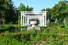 Free Timisoara Roses Park Detail Stock Photos - 99017143