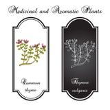 Timjan aromatisk örtsamling Stock Illustrationer