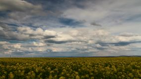 Timlapse - Beautiful moving clouds over a canola field stock footage