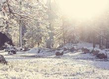 timmar liggandesäsongvinter fotografering för bildbyråer