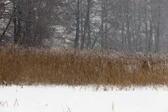 timmar liggandesäsongvinter foto Royaltyfri Fotografi