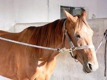 timmar stabling Royaltyfri Fotografi