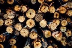 Timmer för runt trä Arkivfoton