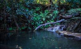 Timmer i vattenfall Arkivfoto