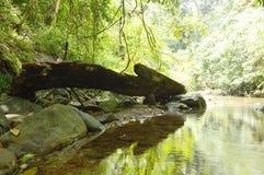 Timmer på invallning beside rive i skog Royaltyfri Foto