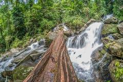 Timmer på vattenfallet Arkivfoton