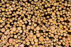 timmerhout stock afbeeldingen
