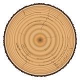 Timmerhouthout op witte achtergrond wordt geïsoleerd die Royalty-vrije Stock Foto