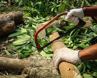 Timmermans scherp hout met zaag Vakman die met handzaag werken Stock Afbeelding