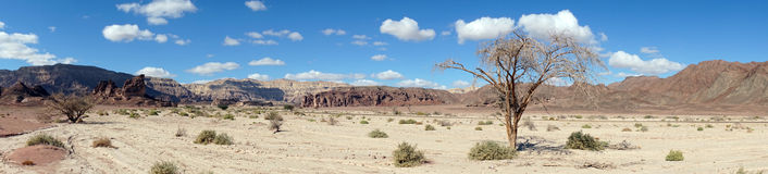 Timna park Royalty Free Stock Photo