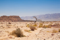 Timna park Stock Photos