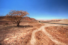 Timna Road. A beautiful and lonely tree on the road to Timna valley park, near Eilat Isral Stock Photos