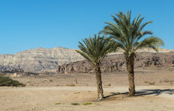Timna valley, Israel Royalty Free Stock Photo