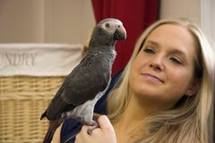 Timneh African Grey. Woman Holding her Pet Bird, Timneh African Grey Royalty Free Stock Images