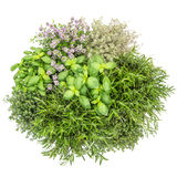 Timo bianco dei rosmarini del basilico dell'alimento del fondo delle erbe fresche saporito Fotografia Stock Libera da Diritti
