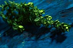 Timo del limone su una fine astratta blu del fondo su Fotografia Stock Libera da Diritti