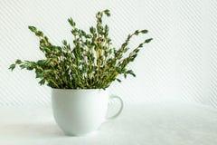 Timo fresco Thymian in una tazza bianca su fondo bianco Buon per gli scopi medici e l'alimento fotografia stock