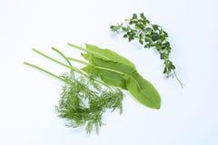 Timo misto dell'aneto dell'acetosa delle erbe Fotografia Stock Libera da Diritti
