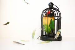 Timore di un concetto chiuso dello spazio Un uccello immagine stock libera da diritti