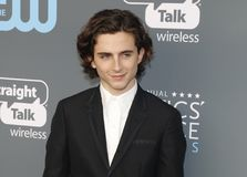 Timothee Chalamet royalty free stock photography