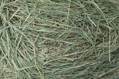 Timothy hay Stock Image